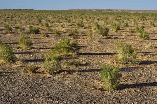 蚂蚁森林种树有什么用?有什么意义呢?
