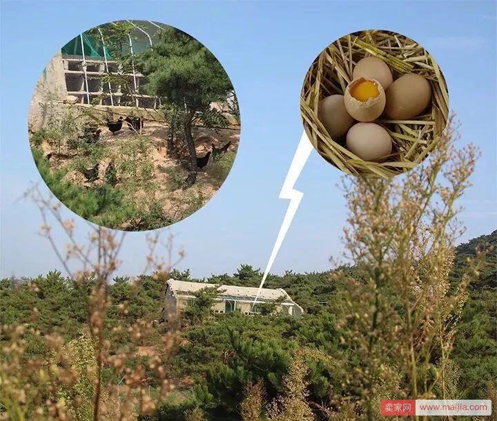 小伙开了家淘宝唯一能看到24小时农场监控画面的鸡蛋店