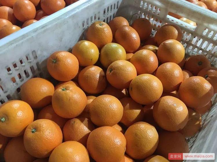 第一次卖脐橙就卖出一个亿的90后小伙,还和菜鸟干了件大事