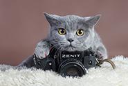 今天你吸猫了吗?淘宝天猫猫粮的销售量持续上涨